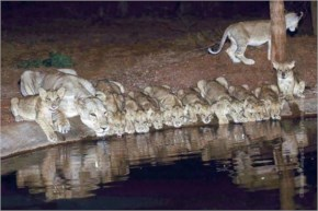 Incredible image took by Bhushan Pandya in Gir