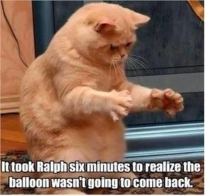 It Took Ralph 6 Minutes To Realize Cat - Funny Cat