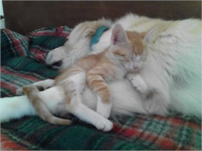 Kitten Has Fallen In Love And Found Her Favorite Pillow