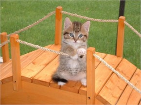 Kitten Playing On a bridge Pictures