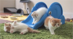 Kittens Playing on a Slide