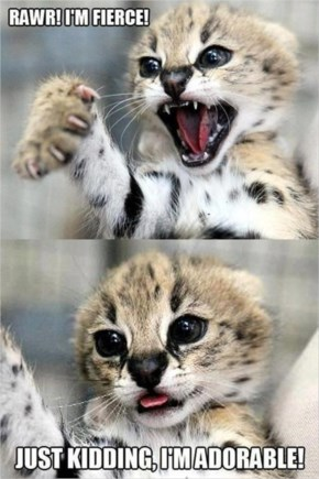 kitty cats When I'm around my girlfriend...Rawr! I'm fierce ! just kidding I'm adorable