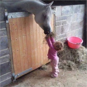 Little Girl Trying to Feed a Horse