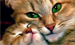 Lovely Cat - Cool Images of Animals