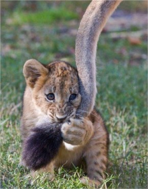 Mamma's tail, Cute cutely cute cute!- Naughty cub