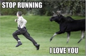 Moose Chasing Man With The Caption Stop Running Funny I Love You