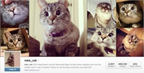 Most Famous Cat Nala who have 3.2 Million Followers