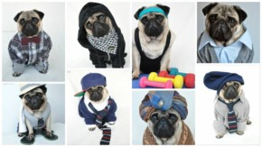 Most Fashionable Pug Nutello fun Gallery