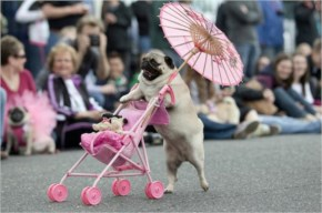 Mumma Doggy taking her small kids on a ride