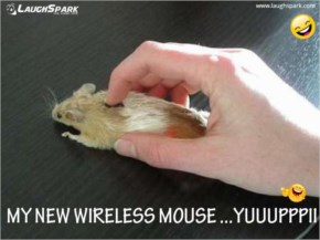 My new Mouse
