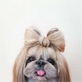15+ Pekingese Dog with a Silky Hairstyles