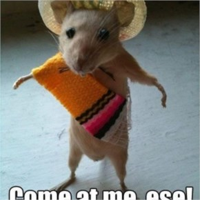 Picture Of A Funny Mouse Looking Like A Mean Mexican