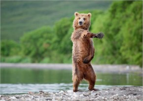 Pictures Of Bears Doing Human Things like to move it move Girl, look at that body..I eat trout