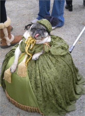 Pugs Are Pretty Much The Worst Dogs Ever Invented