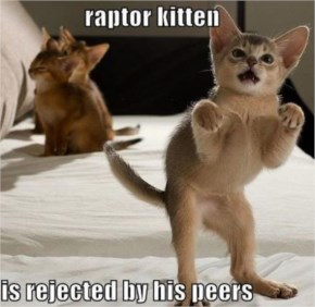 Raptor Kitten Is Not Popular At Home - Funny Pictures