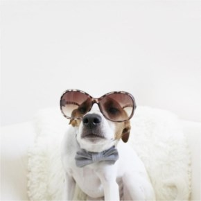 Riley the Parson dog's rockin' his reputation of being the most stylish pup around!