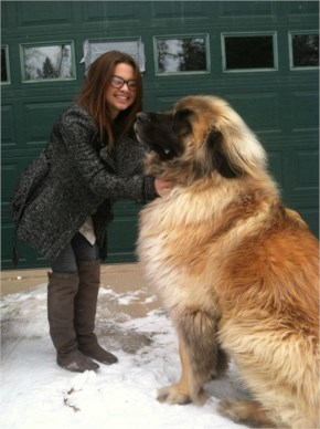 Simba, a Leonberger Type Dog