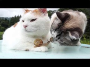 Snail and cats