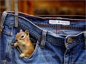 Squirrel in jeans