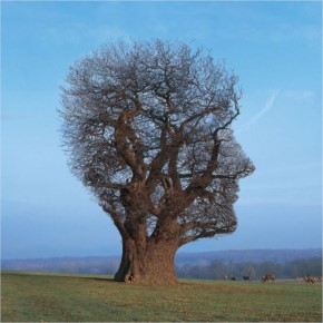 Storm Thorgerson tree of half life