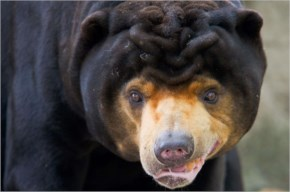 26 unusual and weird animals around the world you might never have seen or heard of