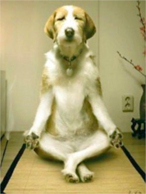 Super Funny Pet Picture - The Yoga Dog