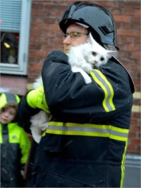 The Most Heartwarming Acts of Kindness From Animal Lovers. This Makes Me Feel Warm Inside.