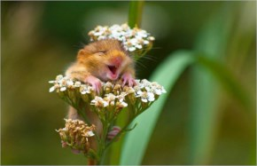 The 25 Happiest Animals In The World