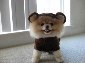 The 25 Happiest Animals In The World- 2 The Pomeranian