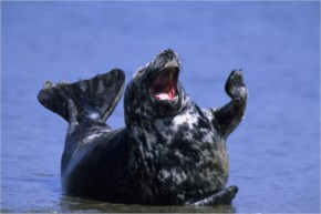The 25 Happiest Animals In The World- 4 Seal