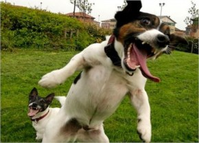 The 25 Happiest Animals In The World- 16 Dog