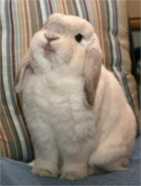 The 25 Happiest Animals In The World- 17 Rabbit