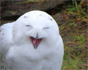 The 25 Happiest Animals In The World- 18 Owl