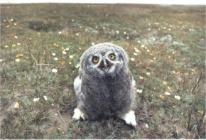 The 25 Happiest Animals In The World- 19 Owl
