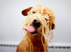 The 25 Happiest Animals In The World- 23 Dog With Spaghetti On His Face