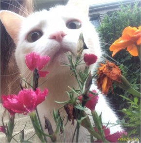 the cute kitten smelling the rose