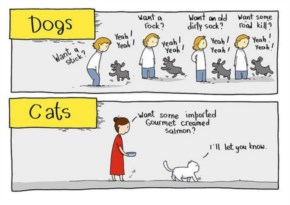 The Difference Between Dogs And Cats Begging For Food