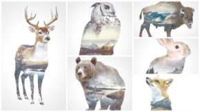 The Faunascapes animal portraits series