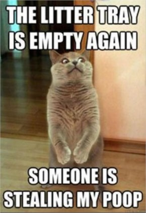 The Litter Tray Is Empty Again - Cat Memes