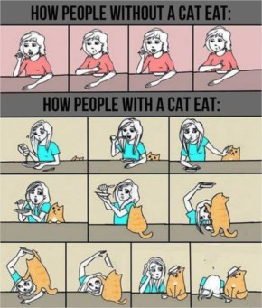 The Most Annoying Pets Ever - Eating With A Cat