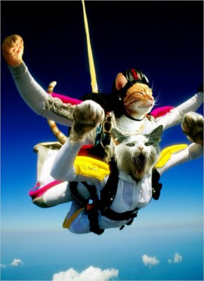 The Super Sky Diving Cats