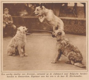 The World's Best Adorable Dogs Of The '20s