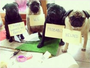 These Pugs All Needed a Bit of Shaming