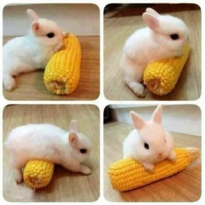 This bunny does not like to share!