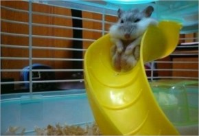 This chubby hamster that finally realized he might be too old for the playground
