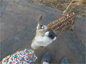 15 Funny animals mistakes and expressions