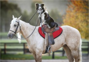This Is A Dog That Rides Horses-Funny Image