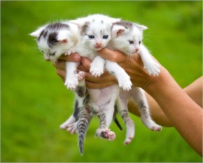 Three Little Cute Cats Kittens