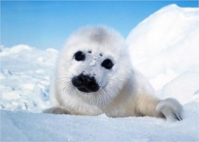 Top 10 Cutest Animals In The World 2014
