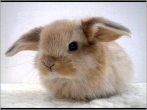 Top 10 Cutest Animals In The World 2014- 8 Bunnies